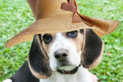 Healthy Critters Ep. 21 by Biostar – Ayurvedic Medicine, Beagles, Vaccinations, and Warhorse