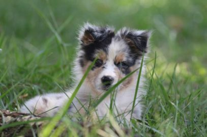 Healthy Critters #46: Puppy Training with Karen Quinlin Plus Puppy Nutrition and Puppy Do's and Don'ts